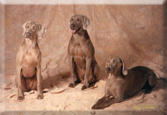 Instudio portrait of dogs